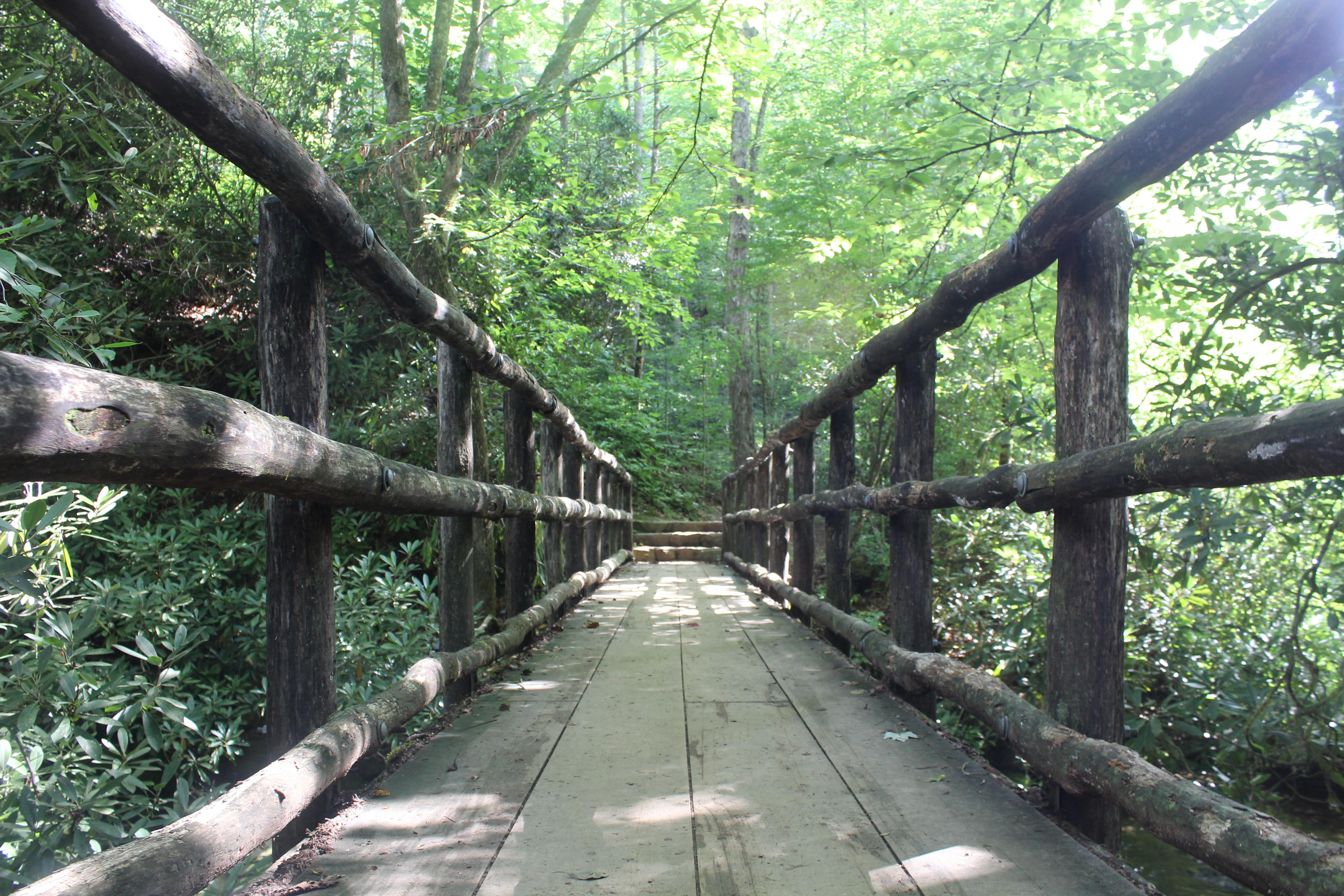 Footbridge in Joyce Kilmer Memorial Forest, Photo by Jodi Rhoden